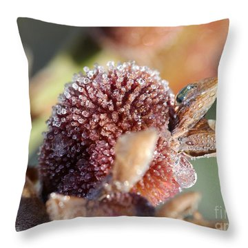 Frozen Dew Drops Melt From Canna Lily Seed Pods Throw Pillow by J McCombie