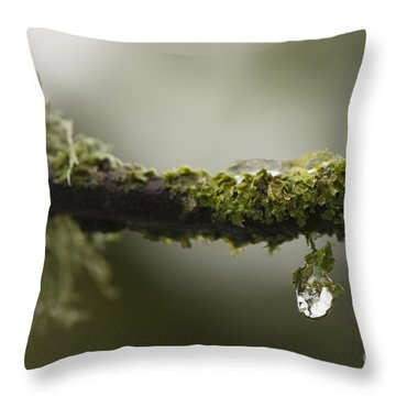 Frozen Droplet Throw Pillow by Anne Gilbert