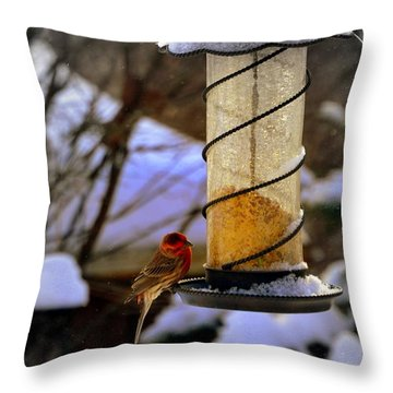 Frozen Feeder And Disappointment Throw Pillow by Zafer Gurel