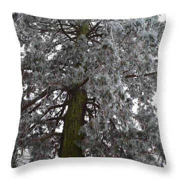 Throw Pillow featuring the photograph Frozen Tree 2 by Felicia Tica