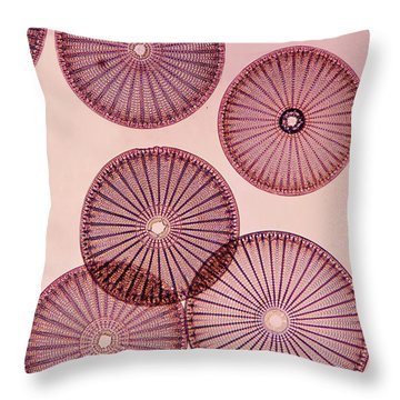 Frustules Of Diatoms Throw Pillow by De Agostini Picture Library