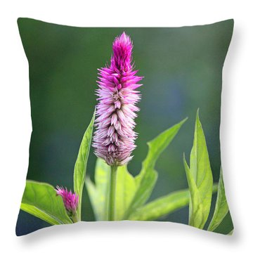 Fuchsia Spike Throw Pillow by Suzanne Gaff