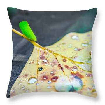 Throw Pillow featuring the photograph Fulgoroidea On A Leaf by Rob Sellers