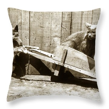 Throw Pillow featuring the photograph Fun With Cats Henry King Nourse Photographer Circa 1900 by California Views Mr Pat Hathaway Archives