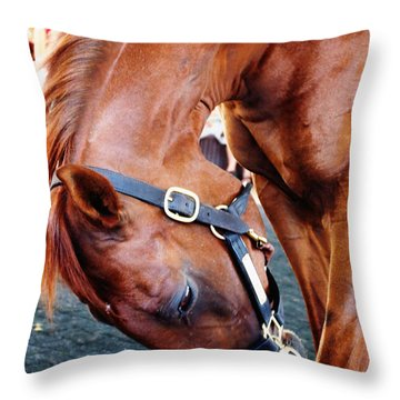 Funny Cide A Champion Throw Pillow