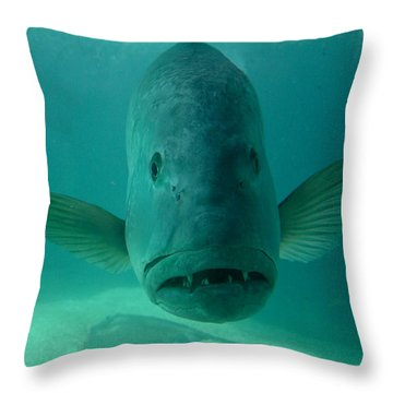Funny Fish Face Throw Pillow by Amy Cicconi