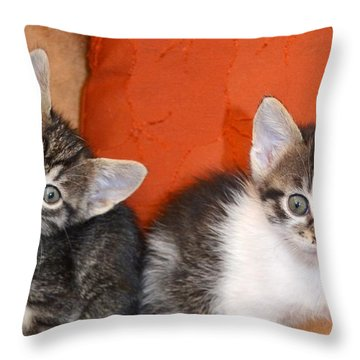 Funny Kittens Throw Pillow