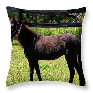 Furry Pony Throw Pillow