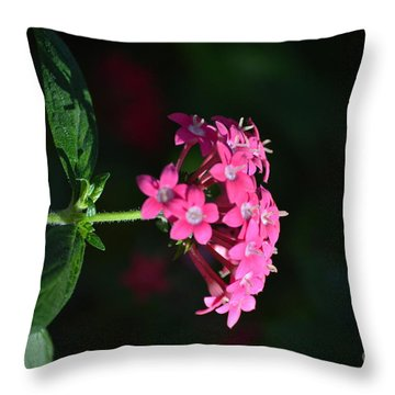 Fushia Slendor Throw Pillow