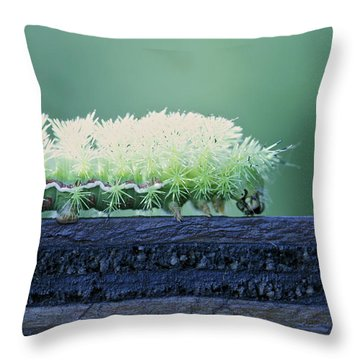 Throw Pillow featuring the photograph Fuzzy Caterpillar by Jane Eleanor Nicholas