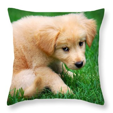 Fuzzy Golden Puppy Throw Pillow by Christina Rollo