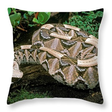 Gaboon Viper Throw Pillow
