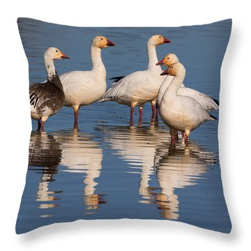 Gaggle Of Snow Geese Reflected Throw Pillow