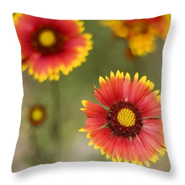Gaillardia 'arizona Sun' Throw Pillow