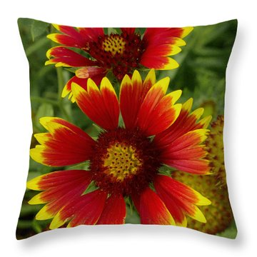 Throw Pillow featuring the photograph Gaillardia / Flowers by James C Thomas