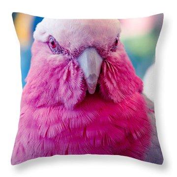 Galah - Eolophus Roseicapilla - Pink And Grey - Roseate Cockatoo Maui Hawaii Throw Pillow by Sharon Mau