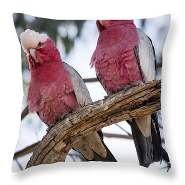 Galahs Throw Pillow