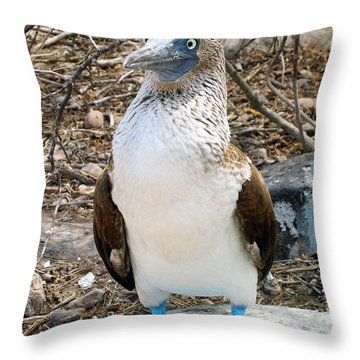 Galapagos Island Blue Footed Booby Bird 1 Throw Pillow by Eva Kaufman