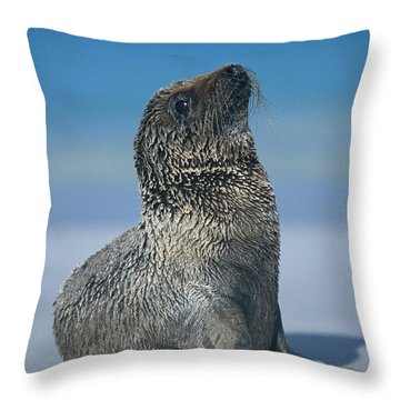 Throw Pillow featuring the photograph Galapagos Sea Lion by Chris Scroggins