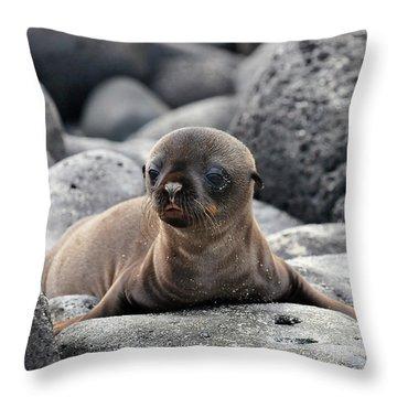 Galapagos Throw Pillows