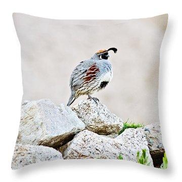 Gambel's Quail Throw Pillow by Scott Pellegrin
