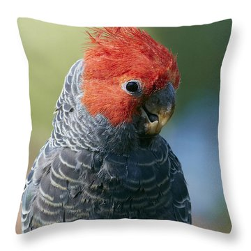 Gang-gang Cockatoo Male Canberra Throw Pillow
