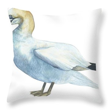Gannet  Throw Pillow by Anonymous