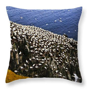 Gannets At Cape St. Mary's Ecological Bird Sanctuary Throw Pillow