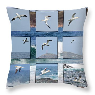 Gannets Galore Throw Pillow by Terri Waters