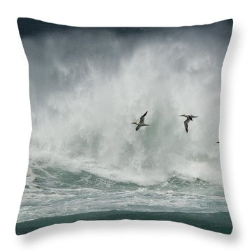 Gannets Past A Raging Sea. Throw Pillow
