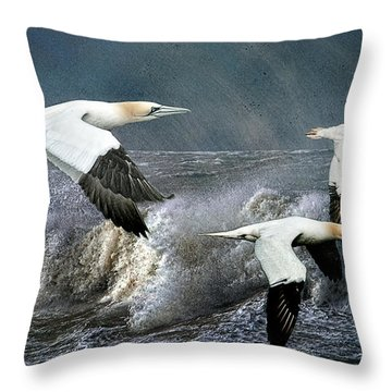 Throw Pillow featuring the photograph Gannets Skimming The Waves by Brian Tarr