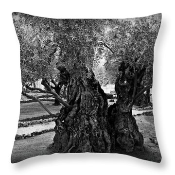 Garden Of Gethsemane Olive Tree Throw Pillow