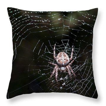 Throw Pillow featuring the photograph Garden Spider by Matt Malloy