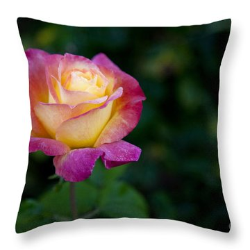 Garden Tea Rose Throw Pillow by David Millenheft