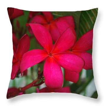 Throw Pillow featuring the photograph Garden Treasures by Miguel Winterpacht