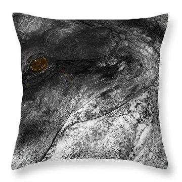 Gator Jaw Throw Pillow by Joseph G Holland