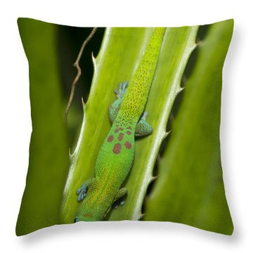 Gecko Throw Pillow by Mike Herdering