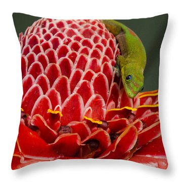 Gecko On Red Ginger Throw Pillow