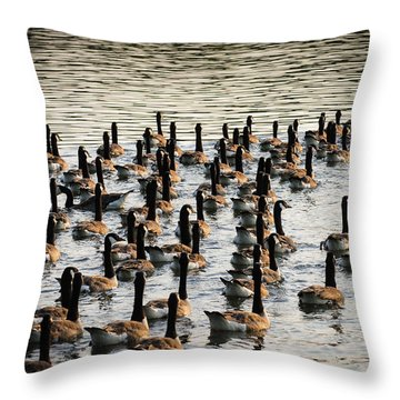 Geese In Sunset Light Throw Pillow