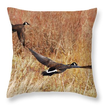 Throw Pillow featuring the photograph Geese - Taking Off In Flight by Janice Adomeit