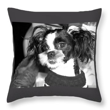 Geez Mom Nothing Happened............. Throw Pillow by Antonia Citrino