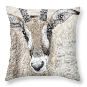 Throw Pillow featuring the photograph Young Oryx by Dyle   Warren