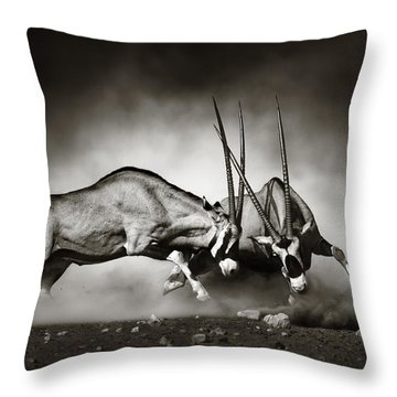 Gemsbok Fight Throw Pillow