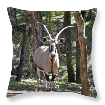 Gemsbok In The Woods Throw Pillow by CML Brown