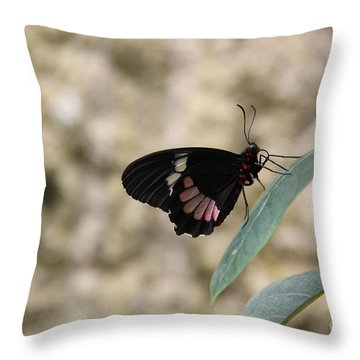 Gentle Throw Pillow