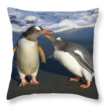 Gentoo Penguin Chick Begging For Food Throw Pillow