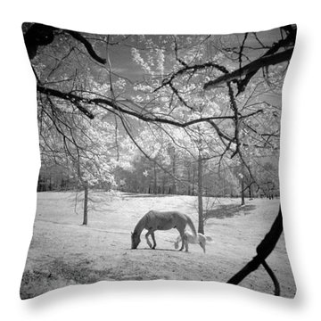 Throw Pillow featuring the photograph Georgia Horses by Bradley R Youngberg