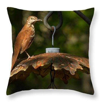 Georgia State Bird - Brown Thrasher Throw Pillow
