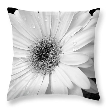 Gerber Daisies In Black And White Throw Pillow by Jennie Marie Schell