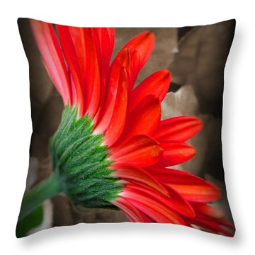 Gerber Daisy Bashful Red Throw Pillow